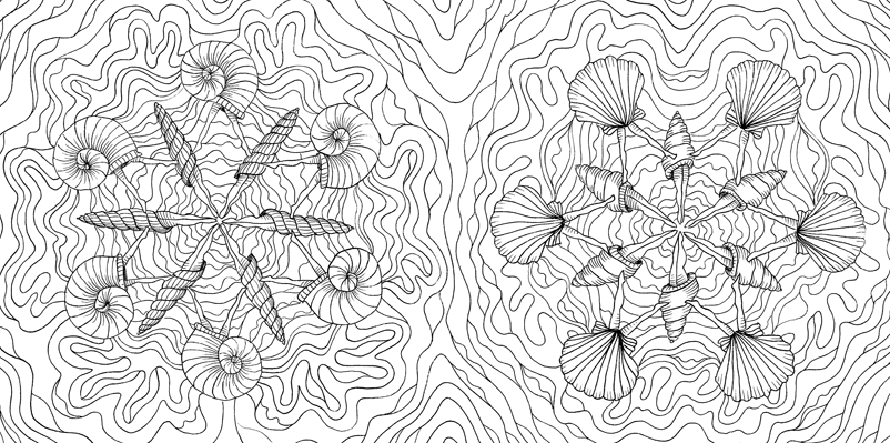 Under the sea black and white drawing, livre à colorier Merveille sous les Mers, dessins Aurélie Castex 13