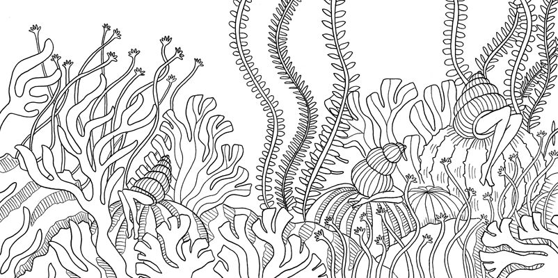 Under the sea black and white drawing, livre à colorier Merveille sous les Mers, dessins Aurélie Castex 16
